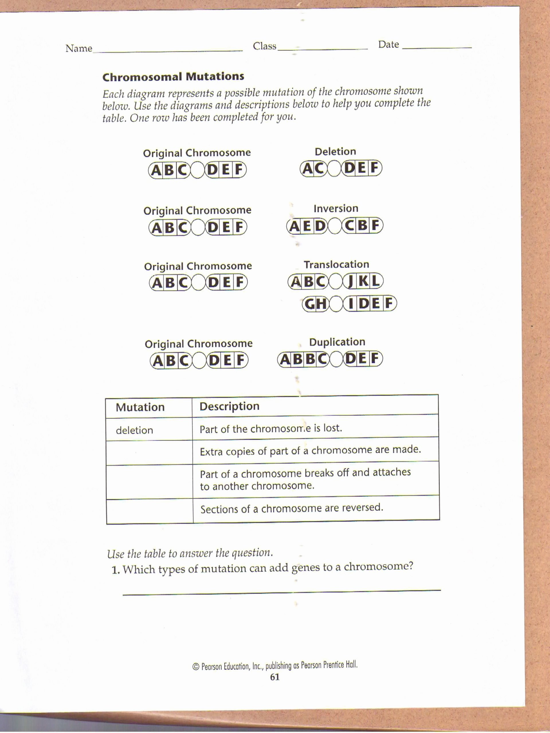 Gene and Chromosome Mutation Worksheet Inspirational Chromosomal Mutations Worksheet