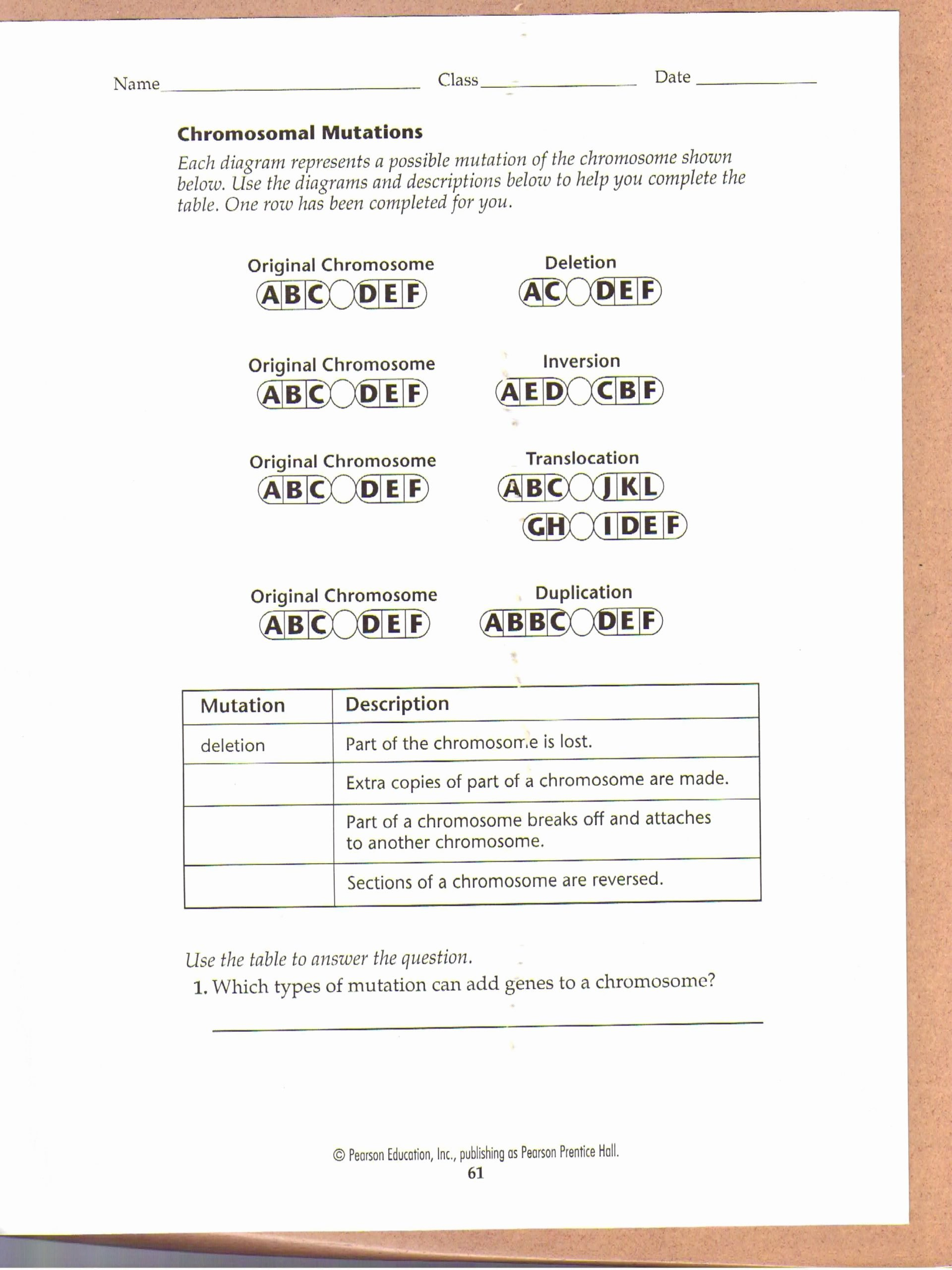 Genetic Mutation Worksheet Answer Key Kids Genetic Mutation Worksheet Answer Key Inspirational