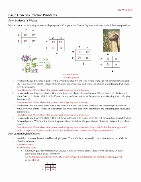 Genetics Practice Problems Simple Worksheet Free Basic Genetics Practice Problems