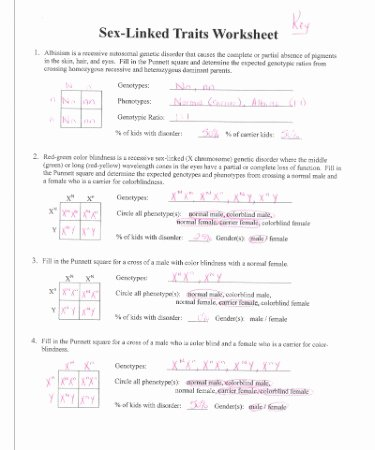 Genetics X Linked Genes Worksheet Ideas Worksheet 2 Linked Traits Answers