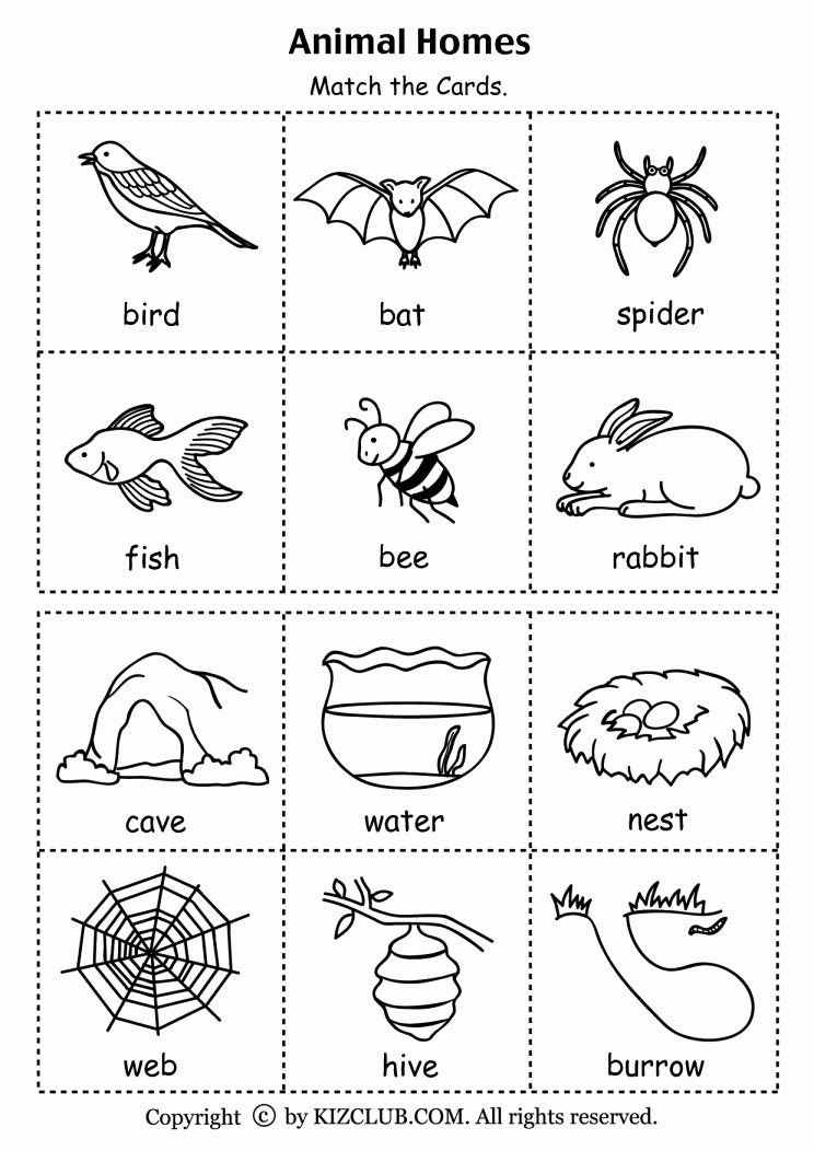 Habitat Worksheets for 1st Grade Best Of 9 Preschool Animal Habitats Worksheet