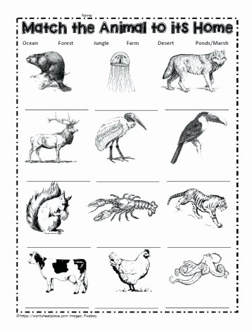 Habitat Worksheets for 1st Grade Ideas Animals In their Habitats Worksheets – Keepyourheadup