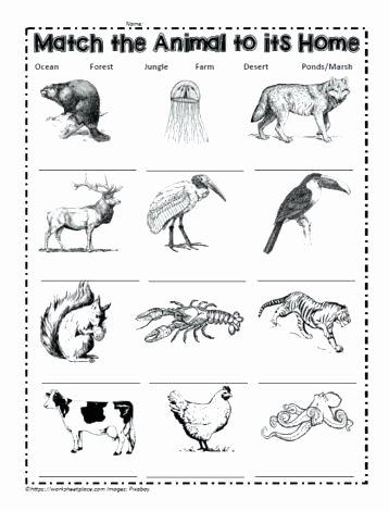 Habitat Worksheets for 1st Grade Ideas Animals In their Habitats Worksheets – Keepyourheadup