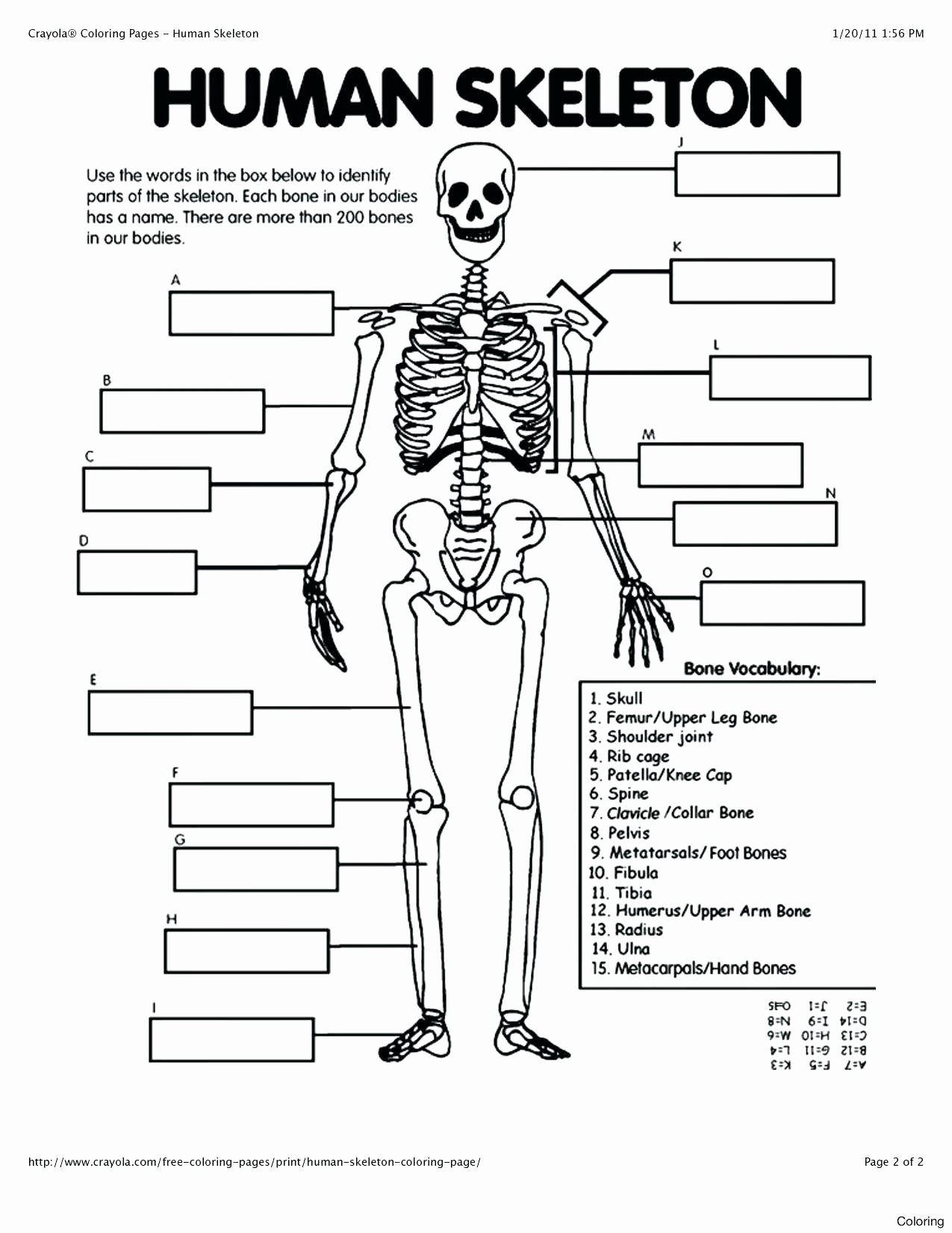Human Anatomy Worksheets for College Free 41 Free Printable Anatomy Coloring Pages Ideas – Slavyanka