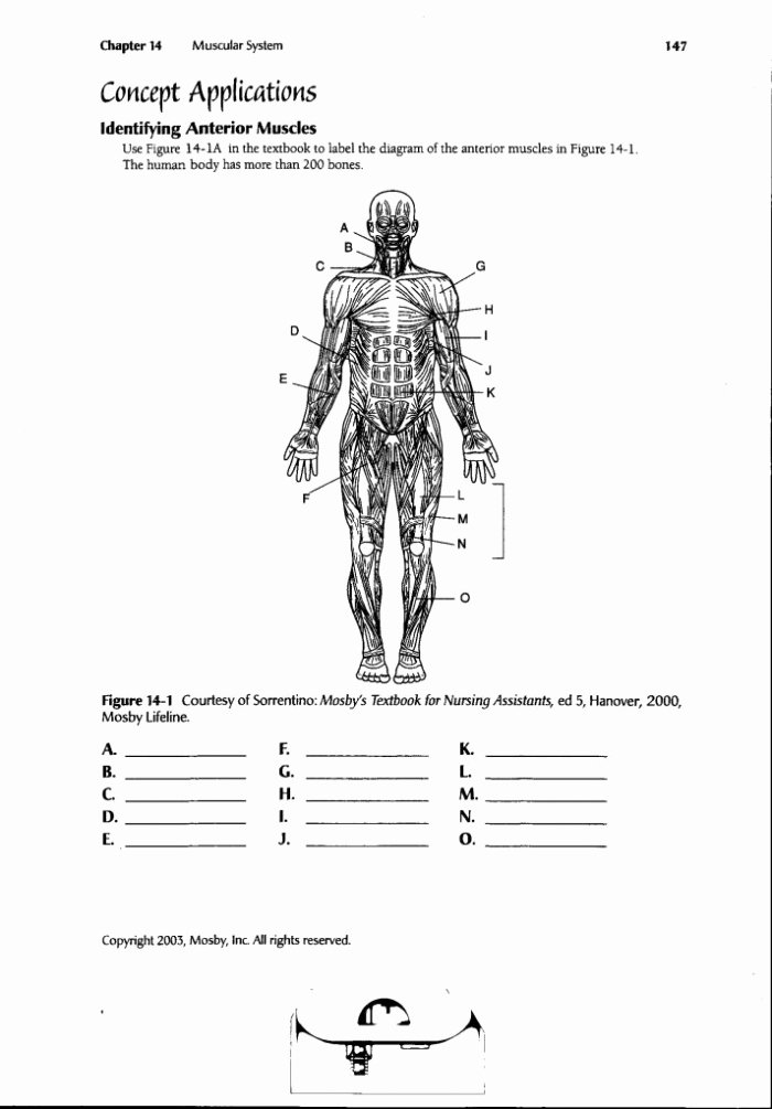 Human Anatomy Worksheets for College Free Human Body Diagram Worksheets