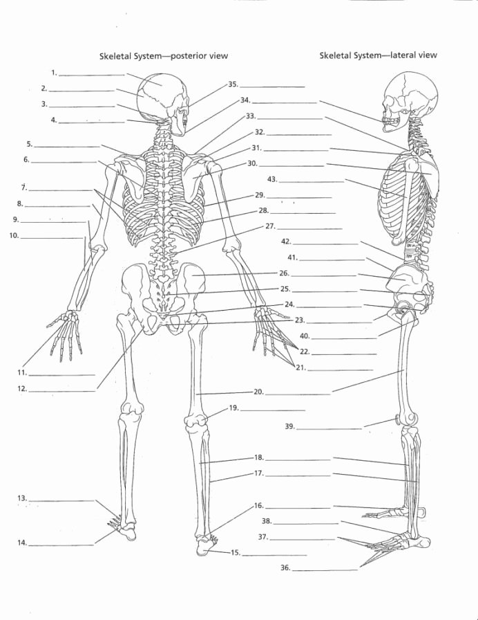 Human Anatomy Worksheets for College Ideas Anatomy Labeling Worksheets Google Search with Human