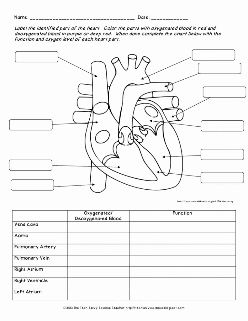 Human Anatomy Worksheets for College Inspirational 12 Human Anatomy Worksheets