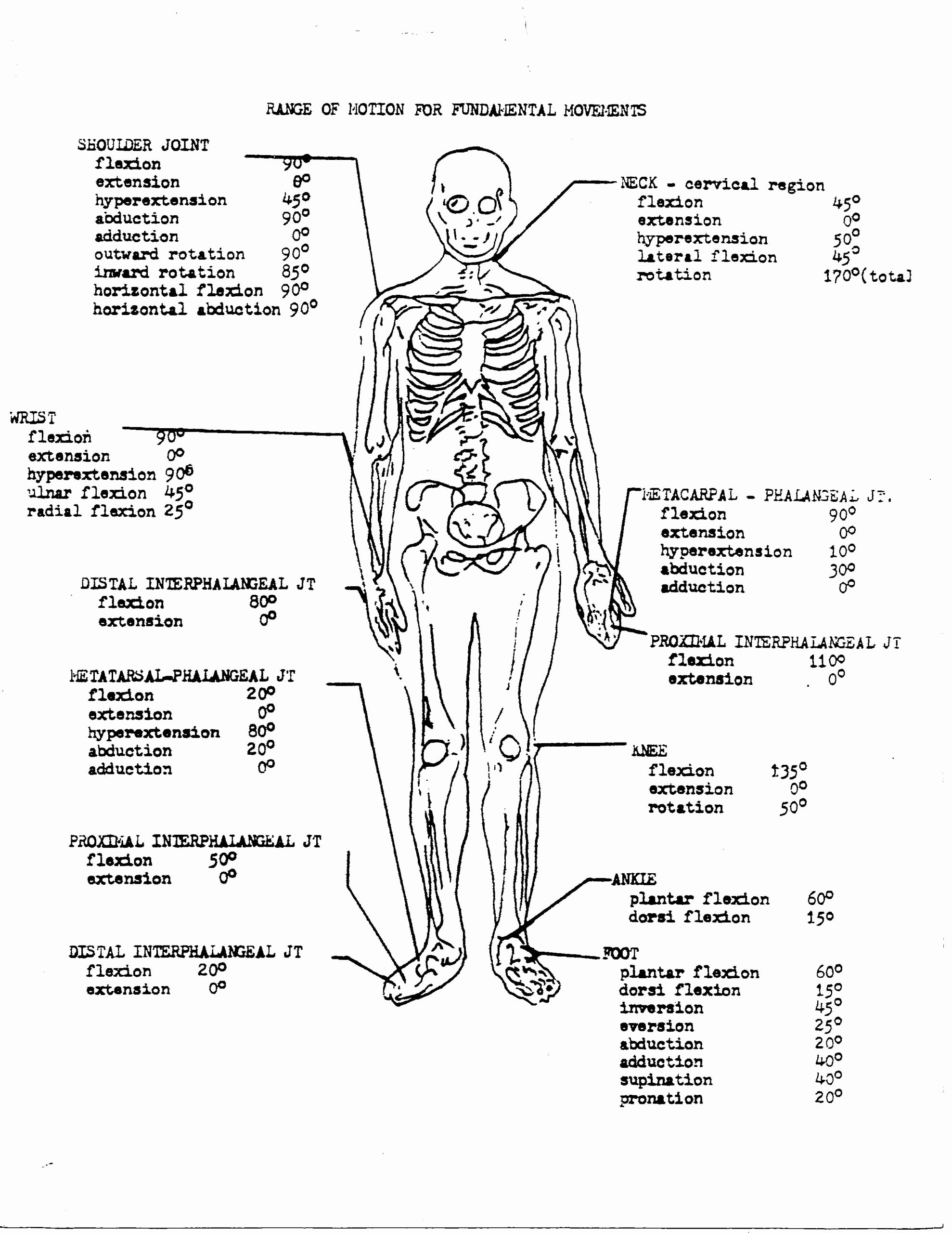 Human Anatomy Worksheets for College New Coloring Book 34d51fb0a1bf6e1ce8ce8a B64ca Free
