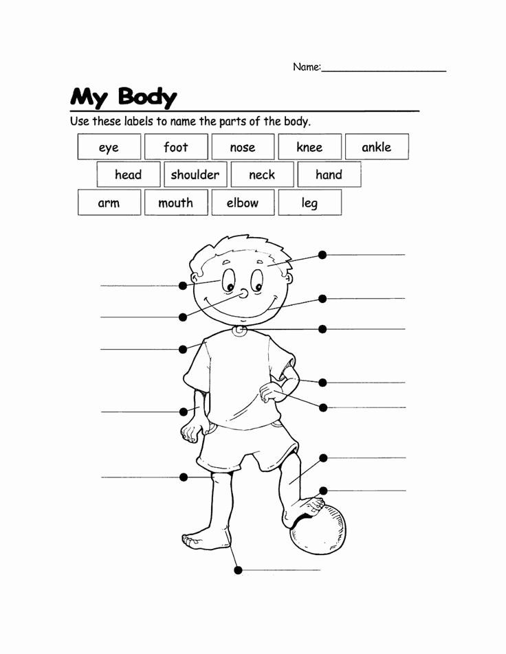 Human Body for Kids Worksheets Best Of Pin On Kindergarten Science