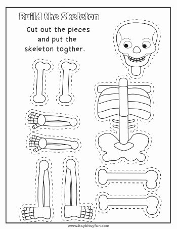 Human Body for Kids Worksheets Free Human Body Worksheets Itsybitsyfun