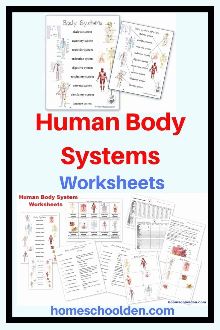 Human Body Systems Matching Worksheet Best Of Human Body Systems Worksheets