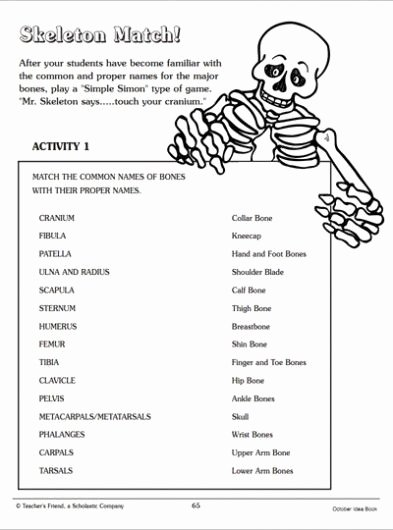 Human Body Systems Matching Worksheet Best Of Skeleton Match Word Matching Page