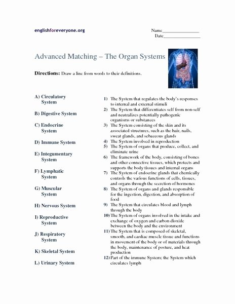 Human Body Systems Matching Worksheet Kids Human Body Systems Matching Worksheet Answers Worksheets