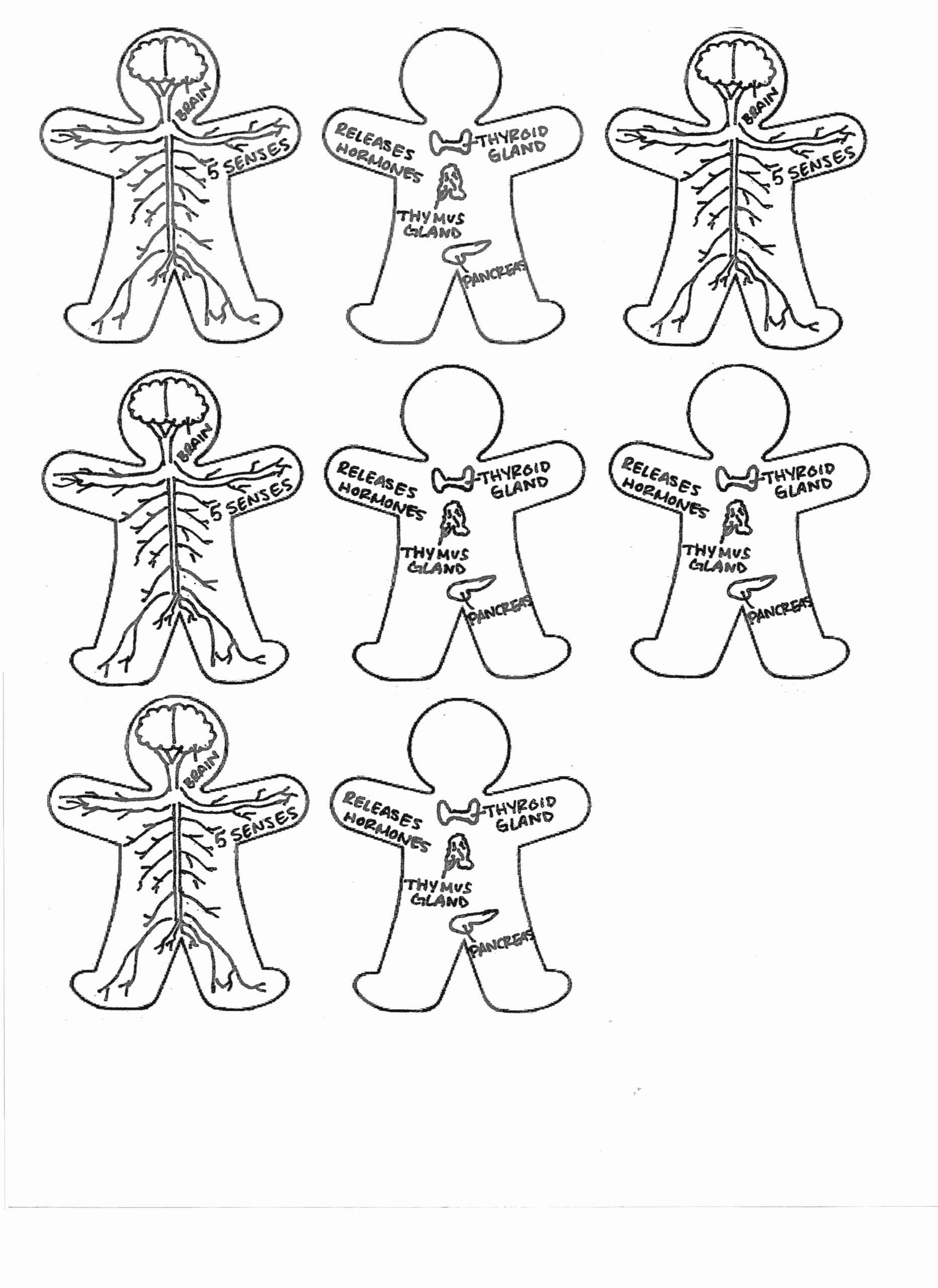 Human Body Systems Matching Worksheet top Hiddenfashionhistory Matching Worksheets for Year Olds