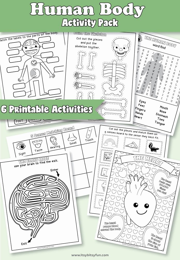 Human Body Worksheets Middle School Best Of Human Body Worksheets Itsybitsyfun