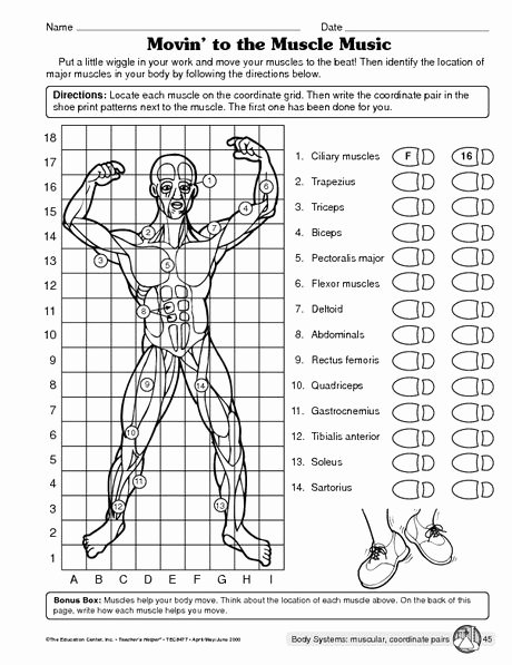 Human Body Worksheets Middle School Free Science Worksheet Muscular System the Mailbox