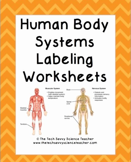 Human Body Worksheets Middle School Inspirational Human Body System Labeling Worksheets