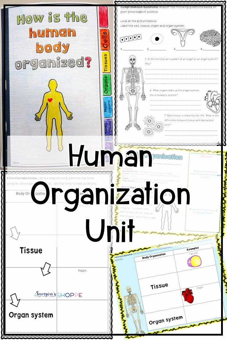 Human Body Worksheets Middle School Kids Human Body organization Unit