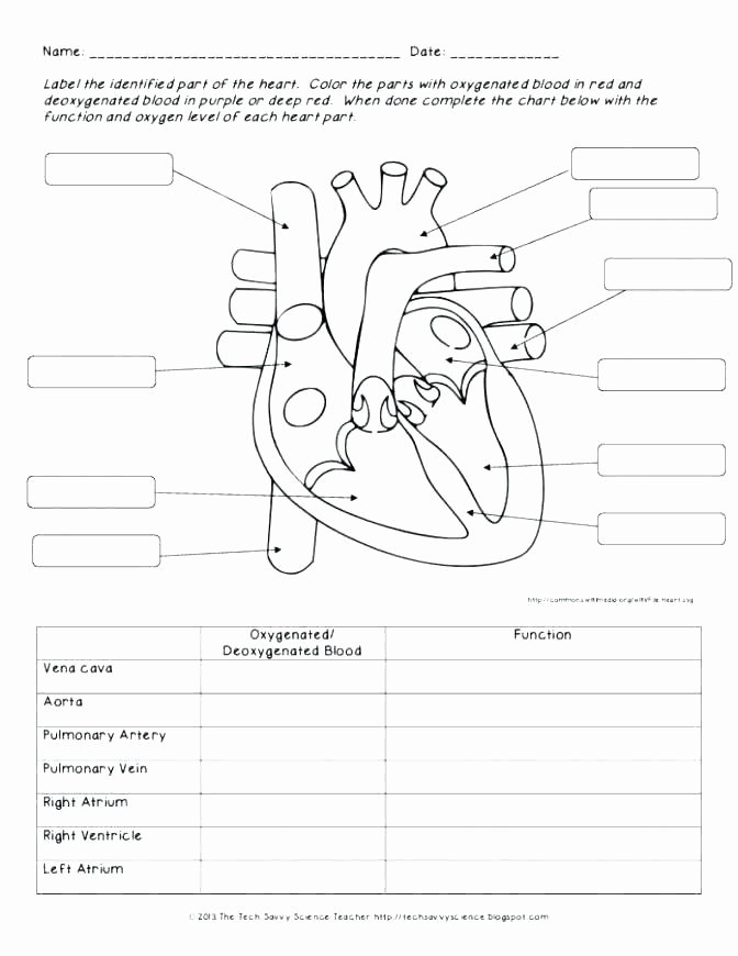 Human Body Worksheets Middle School Kids Human Body Worksheets Middle School Body Systems and