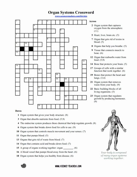 Human Body Worksheets Middle School Printable Cool Multiplication Body Systems Worksheets Answers Math