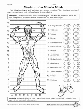 Human Body Worksheets Middle School Printable the Mailbox