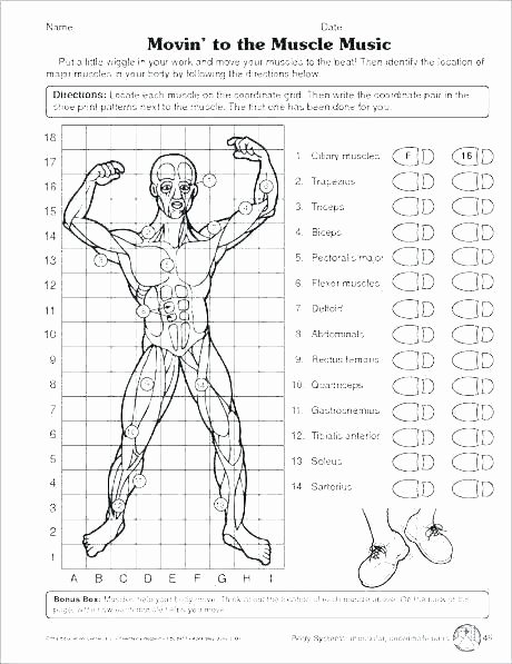 Human Body Worksheets Middle School top Human Body Worksheets Middle School Human Body Systems for