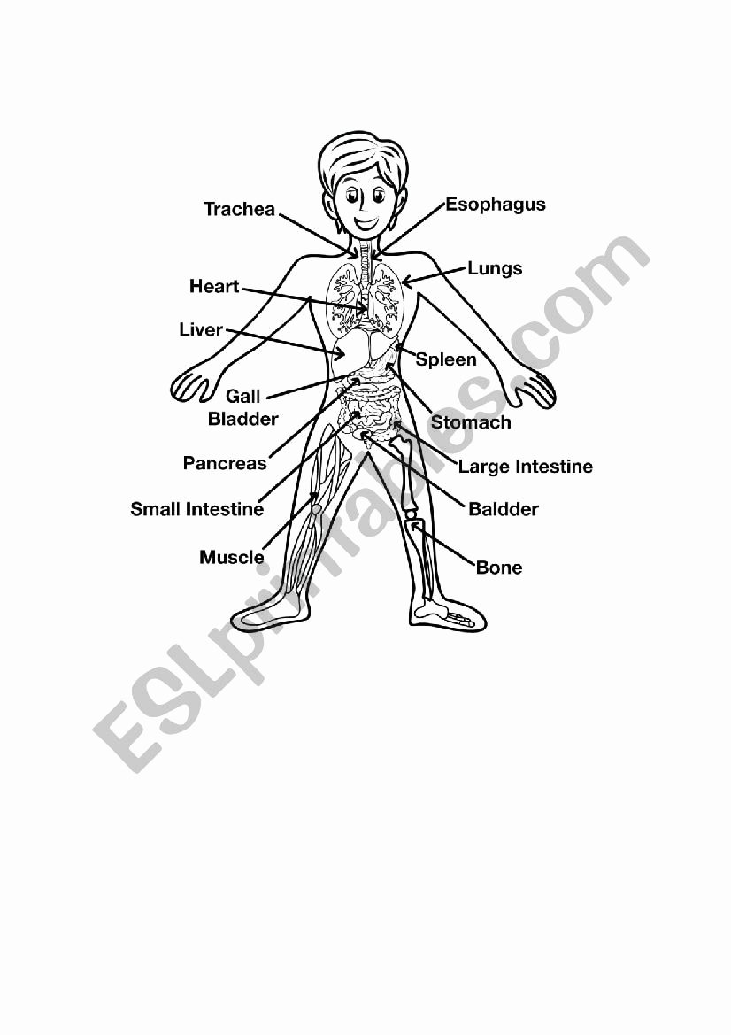 Inside the Living Body Worksheet Free Inside Structure Human Body Human Body Anatomy