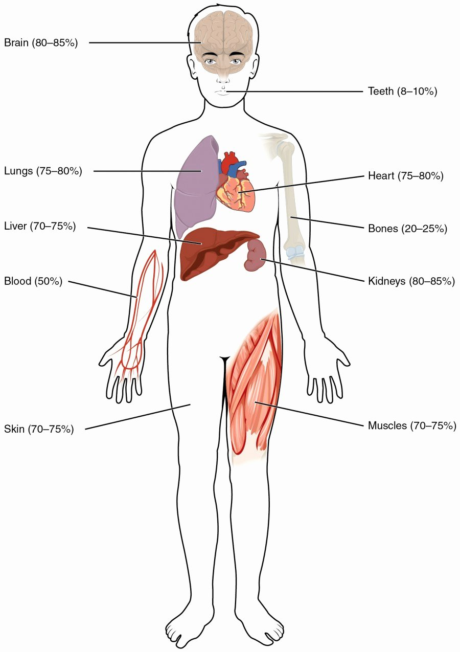 Inside the Living Body Worksheet Fresh Body Fluids and Fluid Partments