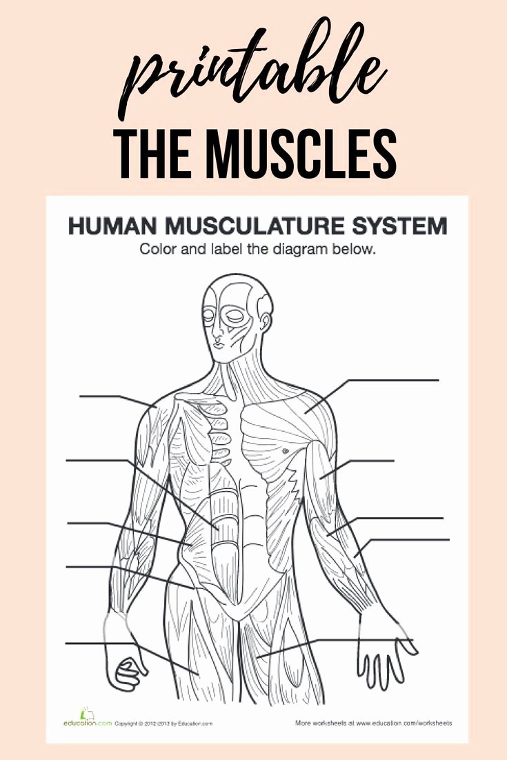 Inside the Living Body Worksheet Ideas Studying the Human Body Get to Know Your Body Inside and