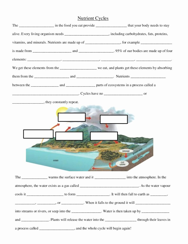 Integrated Science Cycles Worksheet Answers Fresh Nutrient Cycles Worksheet