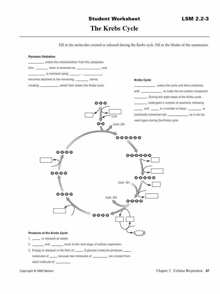 Integrated Science Cycles Worksheet Answers Printable Cycle Of A Worksheet Answers 28 Images Carbon Cycle