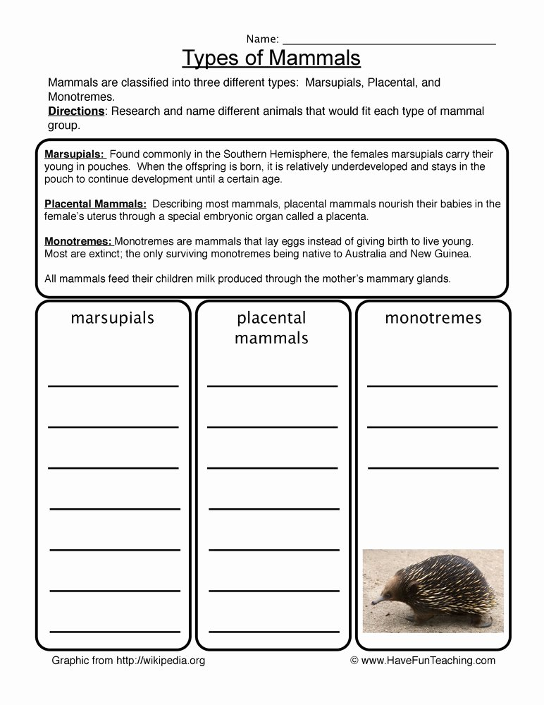 Mammals Worksheets for 2nd Grade Best Of Mammals Worksheet