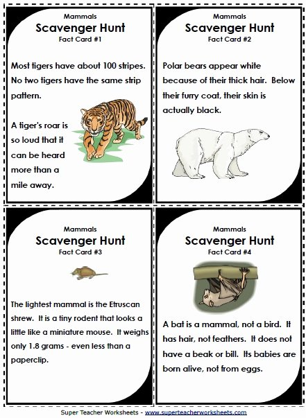 Mammals Worksheets for 2nd Grade Free Science Animal Worksheets
