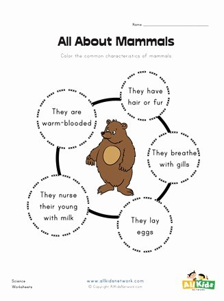 Mammals Worksheets for 2nd Grade Ideas All About Mammals Worksheet