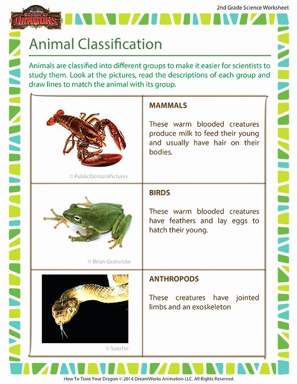 Mammals Worksheets for 2nd Grade Printable Animal Classification Worksheet – 2nd Grade Animal Science
