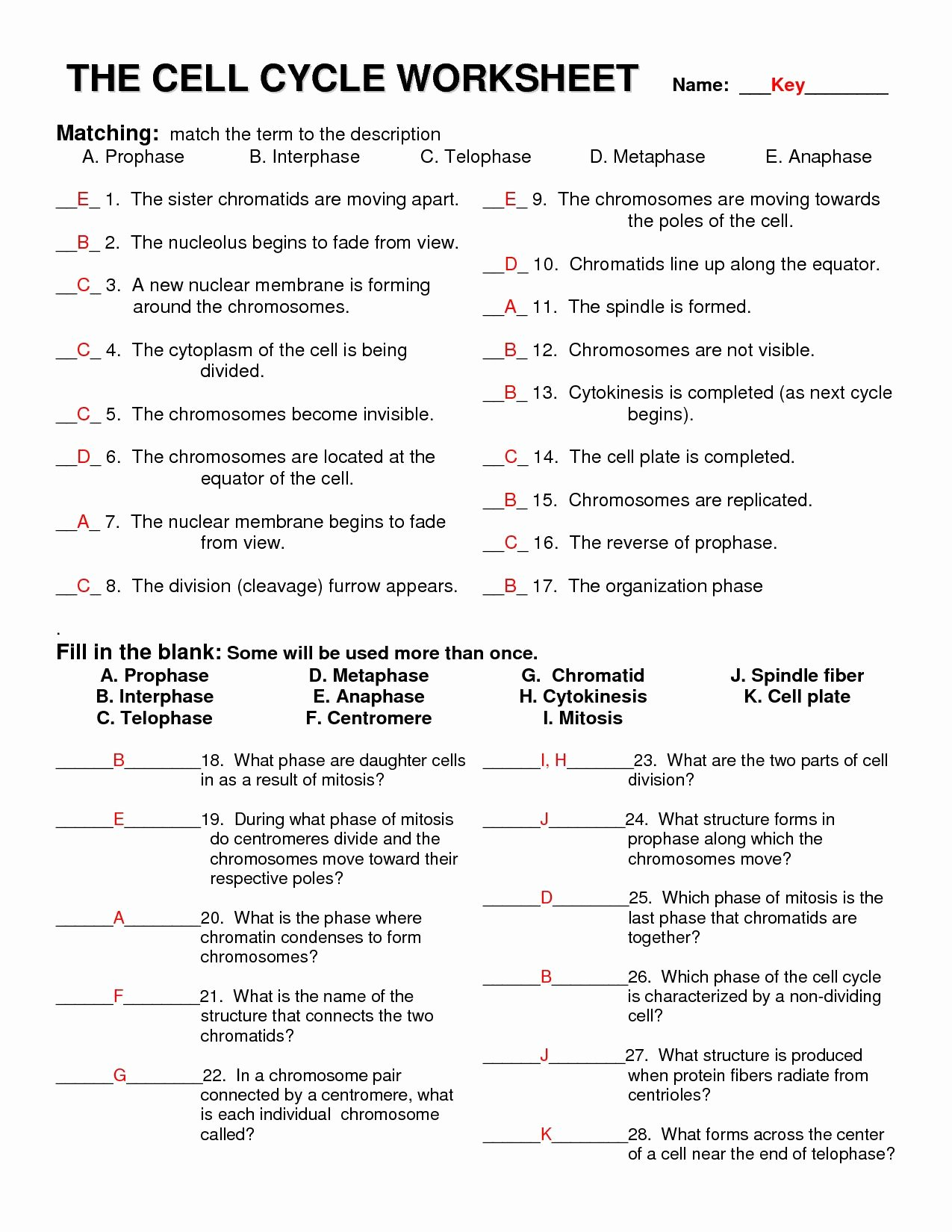 Meiosis Matching Worksheet Answer Key Kids Meiosis Matching Worksheet Answer Key Best 13 Best