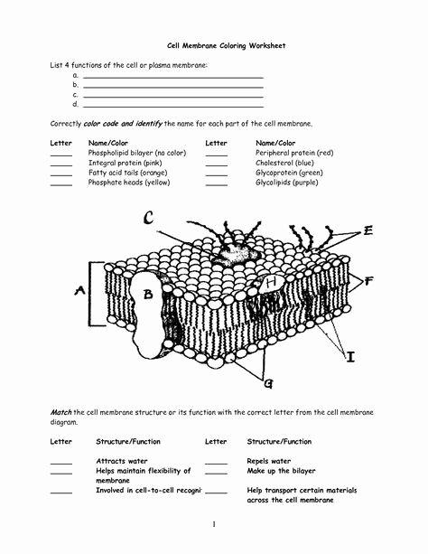 Membrane Structure and Function Worksheet Best Of Cell Membrane Worksheet Google Search
