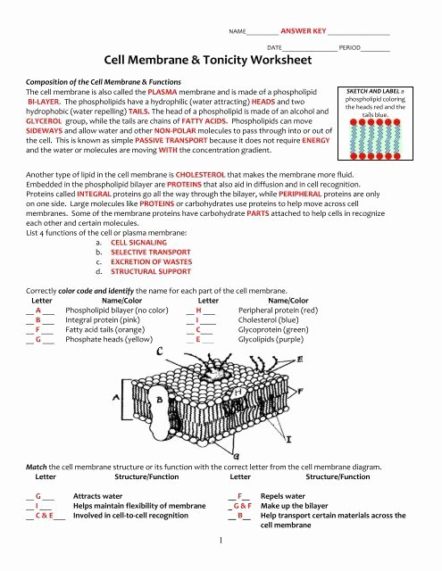 key cell membrane and tonicity worksheetpdf