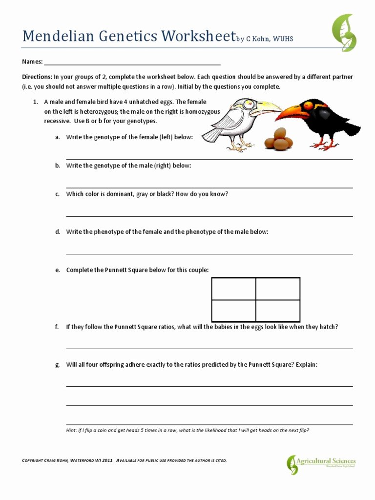 Mendelian Genetics Worksheet Answer Key Free Introduction to Genetics Worksheet Answer Key