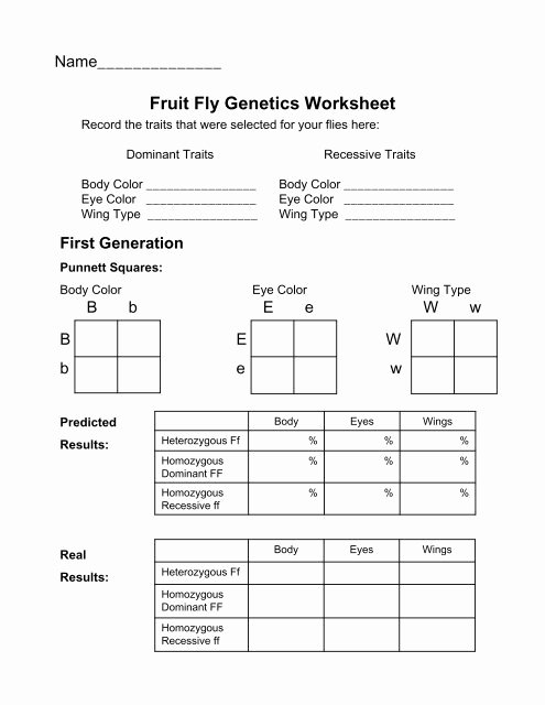 Mendelian Genetics Worksheet Answer Key Lovely Fruit Fly Genetics Worksheet
