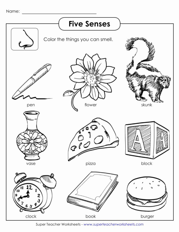Middle School Life Skills Worksheets Best Of Worksheet Senses Printable Worksheets and Activities for