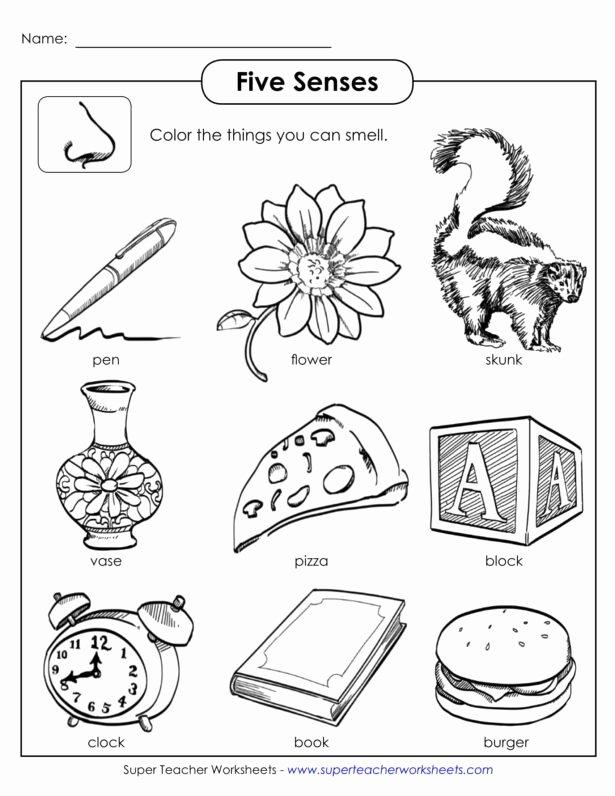 Middle School Life Skills Worksheets Best Of Worksheet Senses Printable Worksheets and Activities for