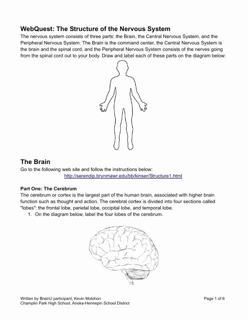 Nervous System Worksheet High School New Webquest the Structure Of the Nervous System the Brain Brainu