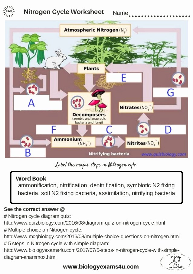 Nitrogen Cycle Worksheet Answer Key Kids the Nitrogen Cycle Worksheet