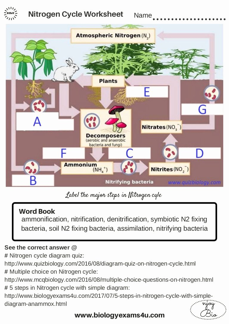 Nitrogen Cycle Worksheet Answer Key New the Nitrogen Cycle Worksheet