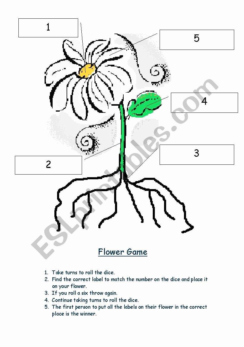 Parts Of A Flower Worksheet Kids Parts Of the Plant Esl Worksheet by Rebecca Gsj