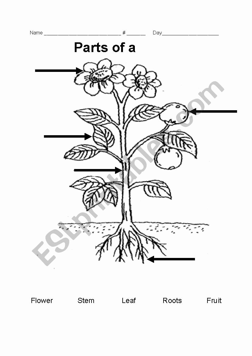 Parts Of A Flower Worksheet Lovely Parts Of A Plant Esl Worksheet by Teacher Rainbow