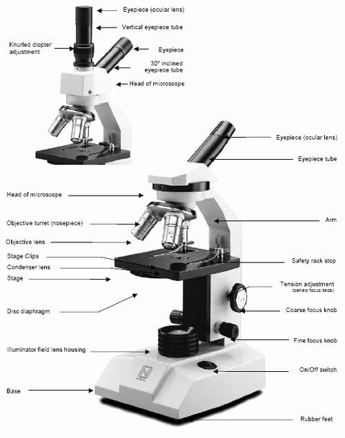 Parts Of A Microscope Worksheet Free Microscope Maintenance Tips