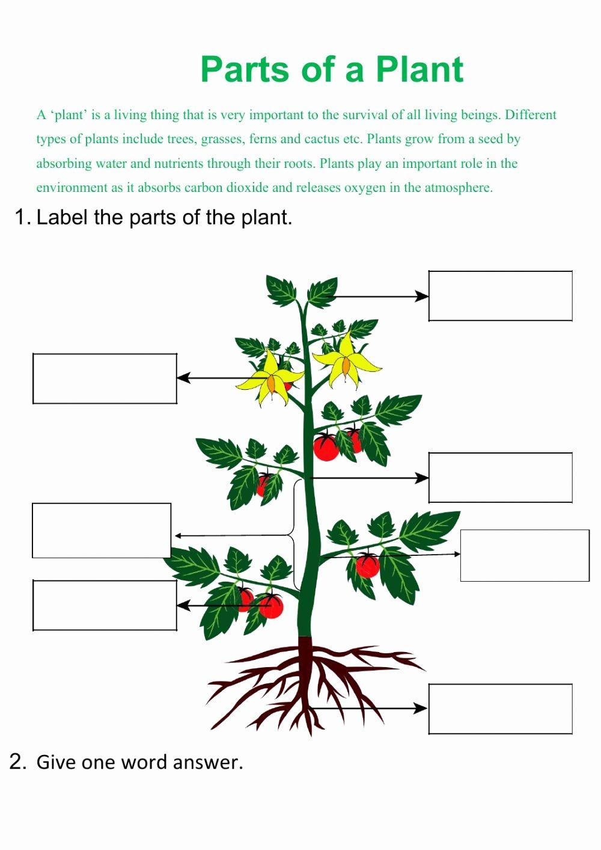 Parts of Plant bm ma