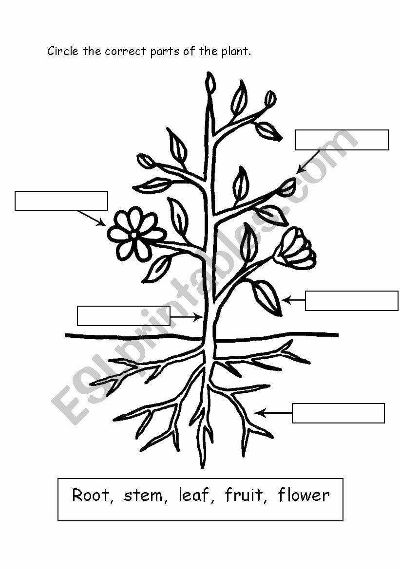 Parts Of A Plant Worksheet Fresh Parts Of Plant Esl Worksheet by Miss J Sabir